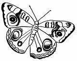 Butterfly Clipart Peacock Coloring Clipground Monarch sketch template