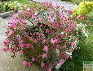 Arbuste Fleuri En Pot : la plantation d 39 une azal e japonaise en pot jardipartage ~ Premium-room.com Idées de Décoration
