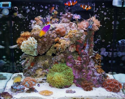nano reef aquarium 3g 34g my 34 gallon sea max 130d