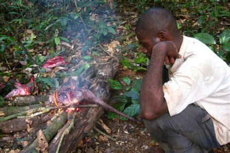 bushmeat hunting  greatest threat  africas wildlife