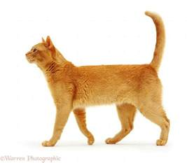 cat walking photo wp11233