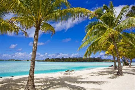 palm trees lounge chairs and white sand on a tropical
