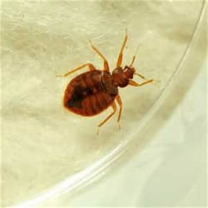 bed bugs in south portland With bed bugs portland
