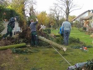 Wurzeln Entfernen Garten Garten Umgraben Brombeeren Wurzeln
