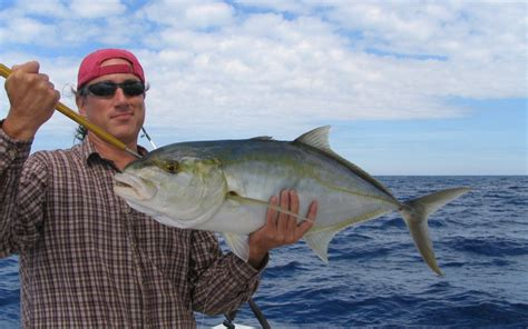jack yellow fish west key fishing florida common keys reef they atlantic caught types different side
