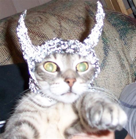 Alex Phelps The Cats Have Powerz Crime Crawlers