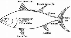 What Types Of Fins Are There