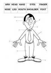 body parts     parts   body