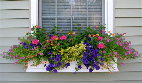 Window Plants by Shapes And Forms Of Flowers For Window Boxes