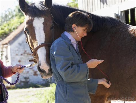 horse vet veterinarian equine horses care animal tech take signs farm vital glanders animals health veterinarians technician stethoscope quarantine respiration