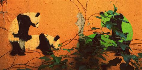 Captive giant pandas may need to form a fight club to save ...