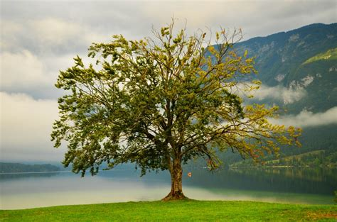 images landscape tree nature outdoor branch