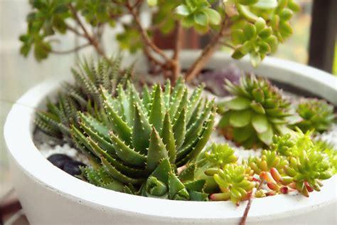guide pour connaître les essentiels sur les plantes