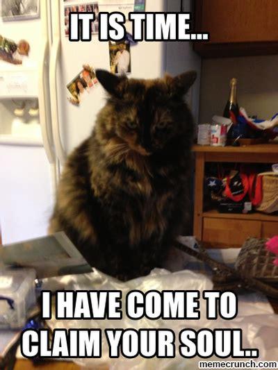 Evil Meme - soon cat meme memes