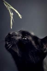 Curiosity Black Cat