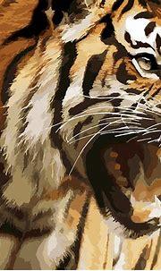 Tiger Royal National Park · Free image on Pixabay