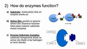 Aim 7e  How Do Enzymes Control Chemical Reactions