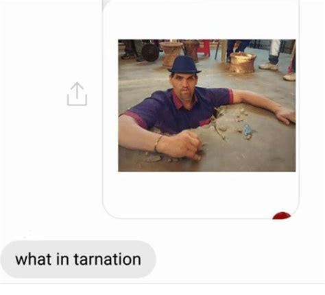 What In Tarnation Memes - 25 best memes about what in tarnation what in tarnation memes