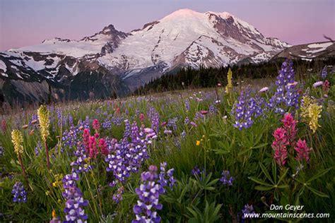 Mount Rainier, Sunrise, Yakima Park, flowers, prints ...