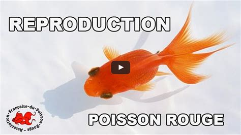le site du poisson la reproduction du poisson
