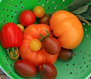 Tomaten Wann Pflanzen : wann pflanzt man tomaten wann sind tomaten reif infos f r gr ne gelbe und schwarze sorten ~ Frokenaadalensverden.com Haus und Dekorationen