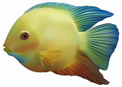 Fish Clipart Exotic Gills Transparent Background Cartoon