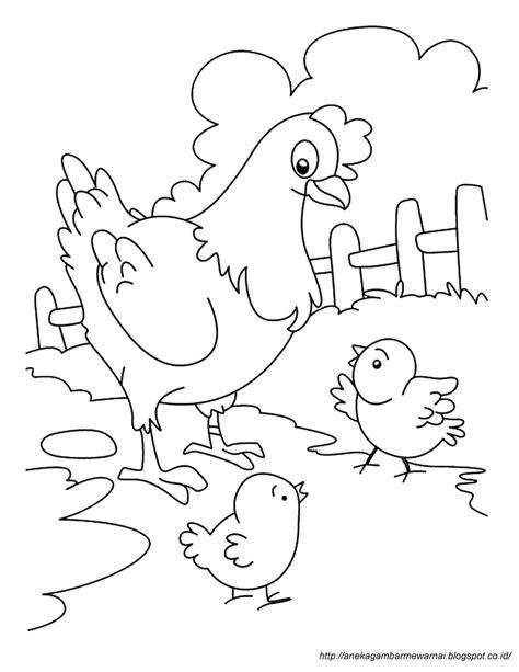 gambar mewarnai ayam untuk anak paud dan tk