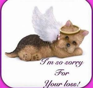 images of sorry for the loss of your dog