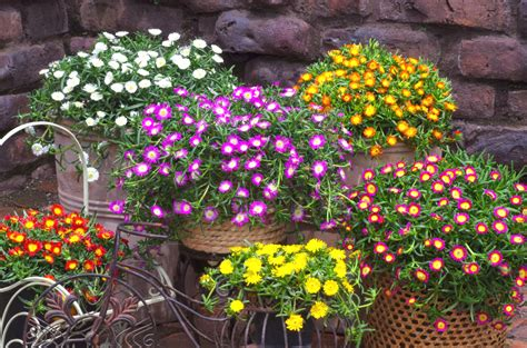 fiori per terrazzi al sole fiori da balcone pieno sole con 10 fiori e piante da