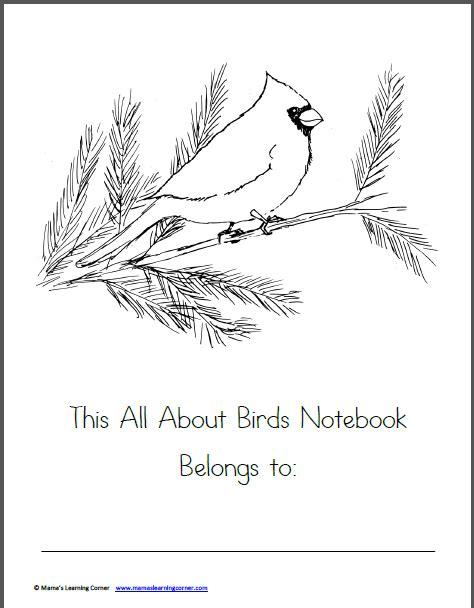 birds worksheet packet for 1st 3rd graders mamas learning corner