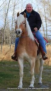 2 Chevaux Occasion : cheval de r ve vente 04 02 13 ~ Medecine-chirurgie-esthetiques.com Avis de Voitures