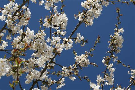 Free Images : branch sky flower bloom food spring