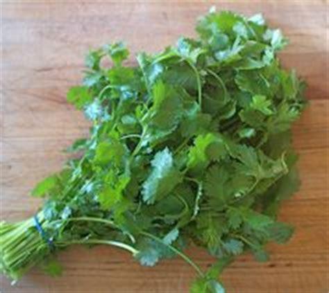 how to freeze cilantro 1000 ideas about freezing cilantro on pinterest cilantro freeze and freeze herbs