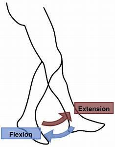 File Flexion Extension Leg Png