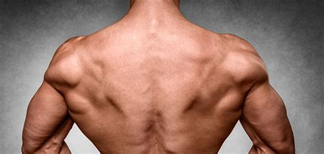 Build Huge Lats: Tips How To Make Your Lats Bigger