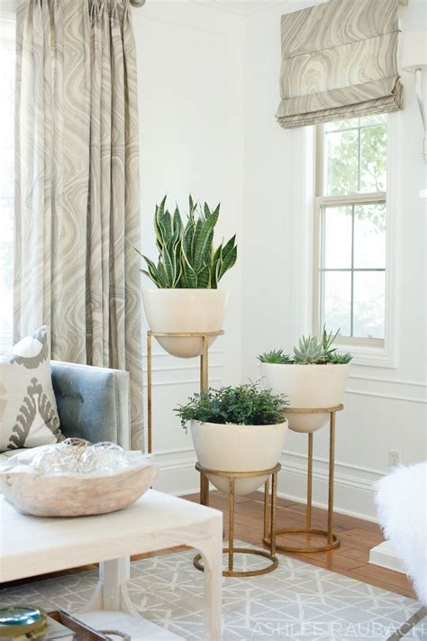 ideas  living room plants  pinterest living room indoor tree plants