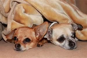Hunde Größe Berechnen : urlaub mit hund in bayern berchtesgadener land stoll 39 s hotel alpina ~ Themetempest.com Abrechnung