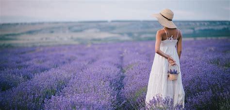 Lavendel Richtig Pflegen by Lavendel Im Garten Richtig Pflegen Und Schneiden