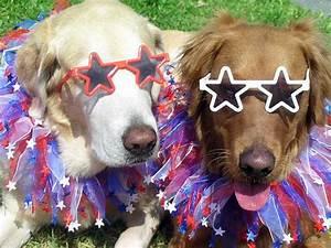 25, Cutest, Patriotic, Pets