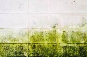Humidité Mur Extérieur : humidit tout savoir sur les rem des naturels contre l ~ Premium-room.com Idées de Décoration