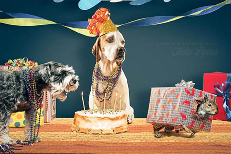 dog birthday dogica  dog party gift ideas