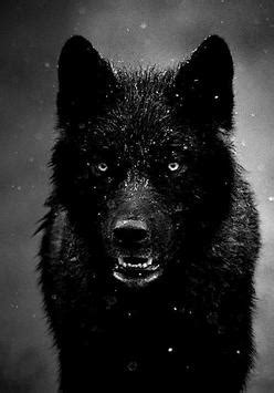 Angry Wolf Wallpaper Hd 1080p by Cool Wolf Wallpapers For Android Apk