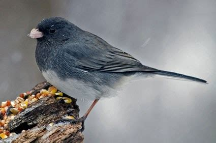 nestwatch
