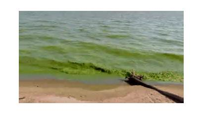 Dead Zones Algae Oxygen Bacteria Nitrogen Eight