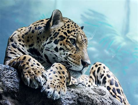 Animals Wallpapers For Mobile - mobile wallpaper cool animals wallpapersafari