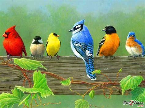 beautiful birds picture weneedfun