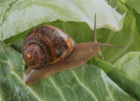 potager pour cuisine comment éliminer les escargots