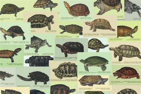 tortoise color individual 11 quot x 14 quot turtle and tortoise water color