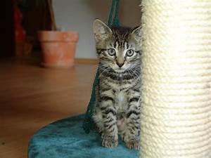 Katzen Fernhalten Von Möbeln : was tun wenn die katze kratzt ~ Michelbontemps.com Haus und Dekorationen