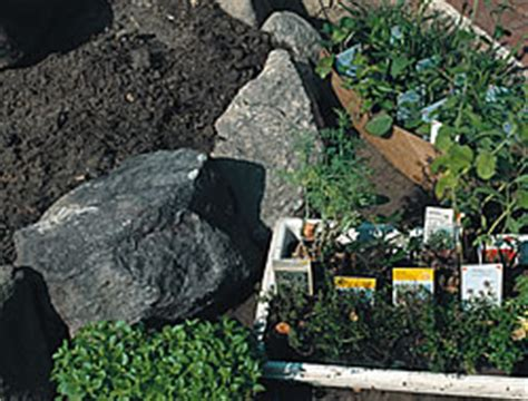 Teichpflanzen Fuer Verschiedene Wasserzonen by Wasserzone